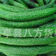 批发出售大量 新鲜富硒黄瓜 优质黄瓜 出口级黄瓜