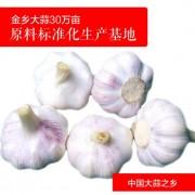 金乡大蒜批发 紫皮大蒜头蔬菜 出口级无公害农产品代收代加工
