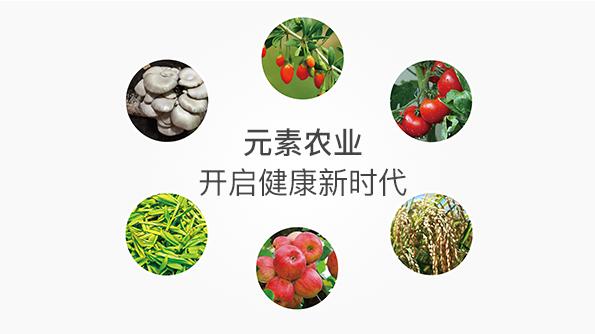 元素美食开启健康新时代