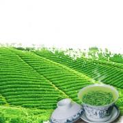 富锗茶 黄山毛峰
