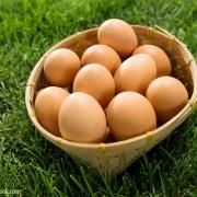 采购富锶鸡蛋