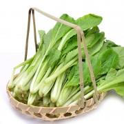 富硒小白菜