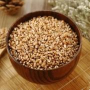 富锗食品原料 富锗小麦