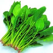 富锗蔬菜批发 富锗菠菜