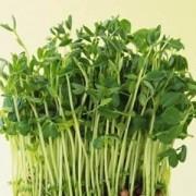 富锗蔬菜 绿豆芽