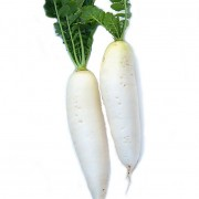 富锗白萝卜