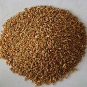 富铬食品原料 富铬小麦
