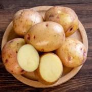 富锌马铃薯 土豆