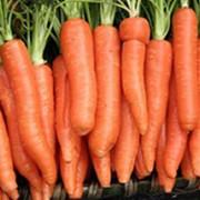富锌胡萝卜