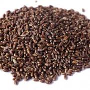 富钙黑小麦 食品原料