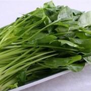 富钙蔬菜 富钙菠菜