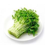 富铁绿豆芽