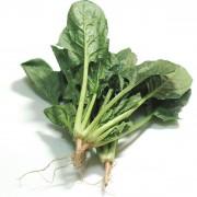 富铁蔬菜 富铁菠菜