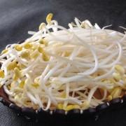 富钼黄豆芽