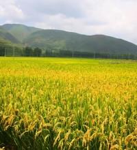 元素农业的发展:微量元素在农业上的用途